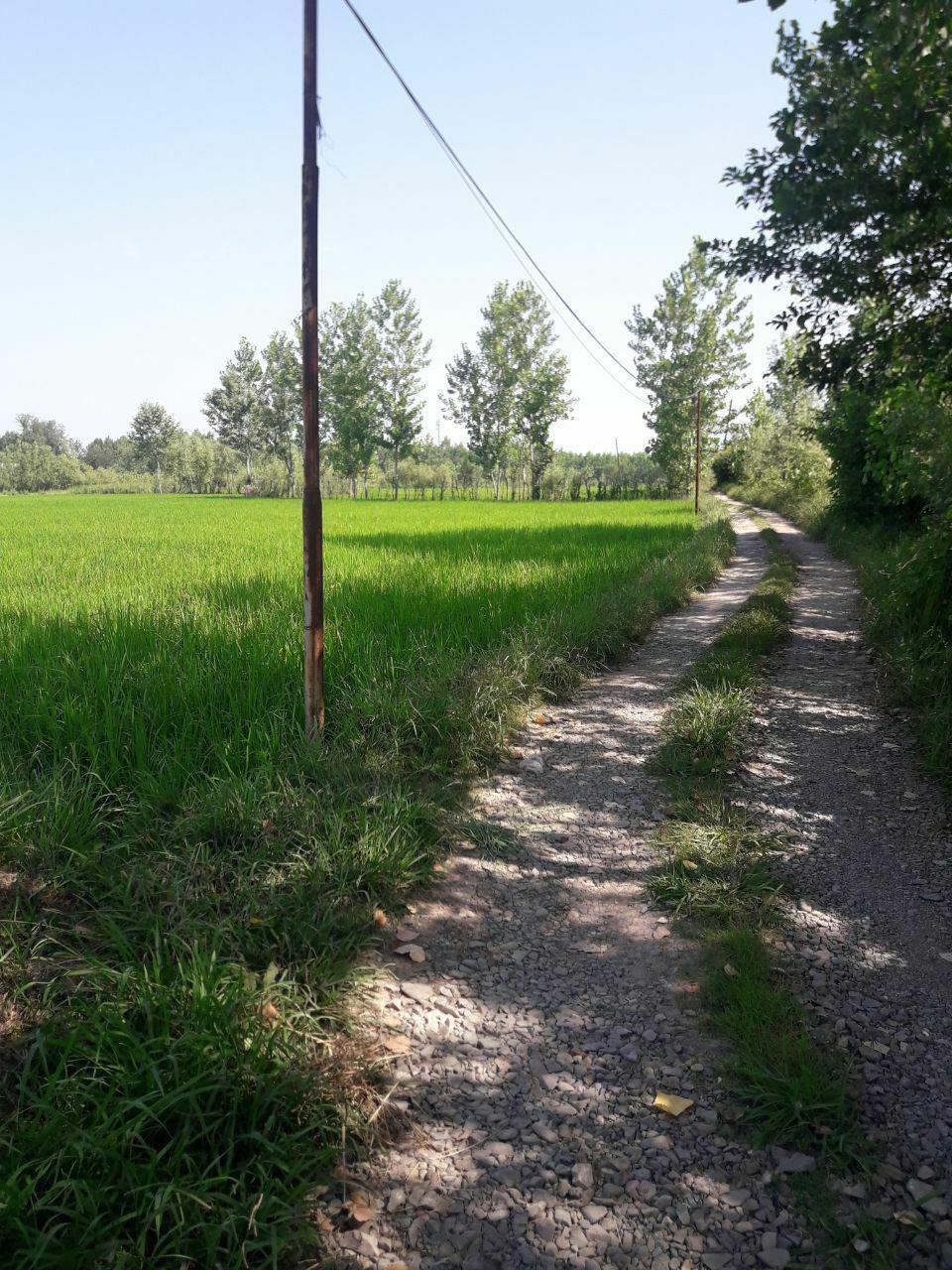 خرید شالیزار مرغوب با امتیاز مسکونی درحومه لاهیجان