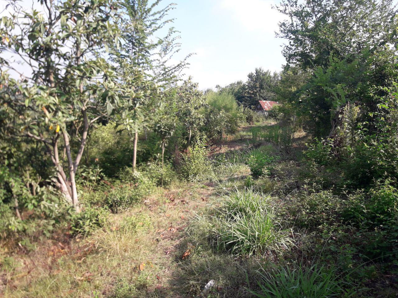فروش زمین باغ کوهستانی طرح هادی در اطاقور