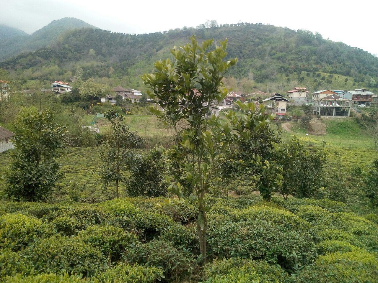 فروش زمین مسکونی جنگلی طرح هادی در رانکوه املش