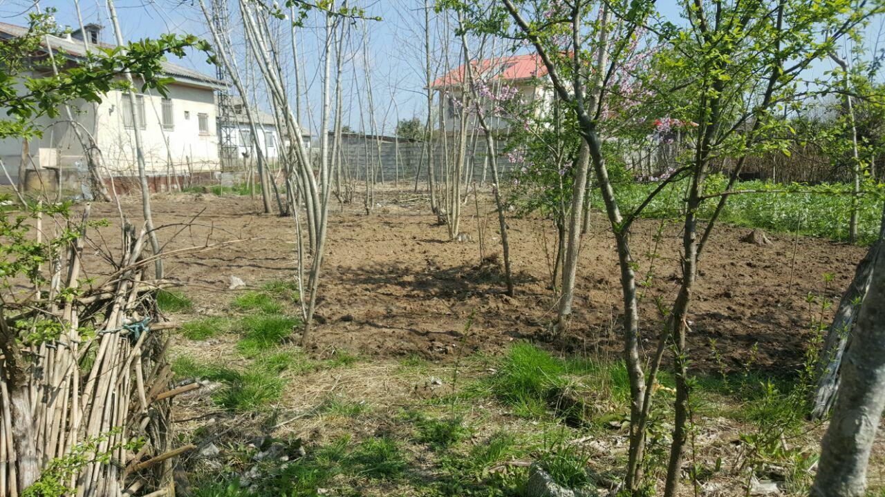 فروش زمین مسکونی جنگلی در لنگرود