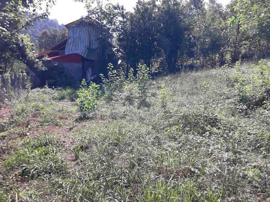 فروش زمین جنگلی 1300 متری در اطاقور