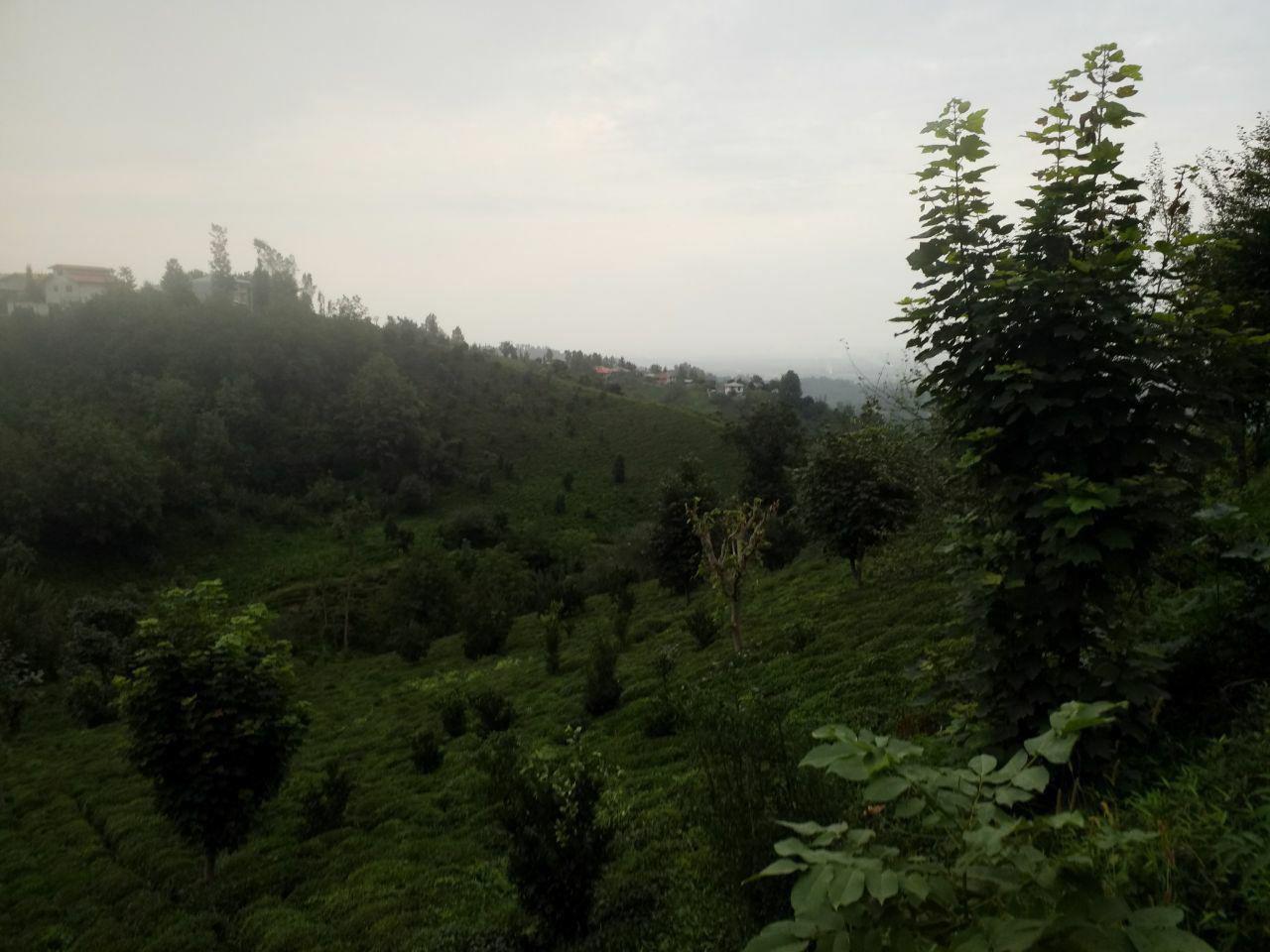 فروش  زمین 1100 متری کوهستانی رانکوه
