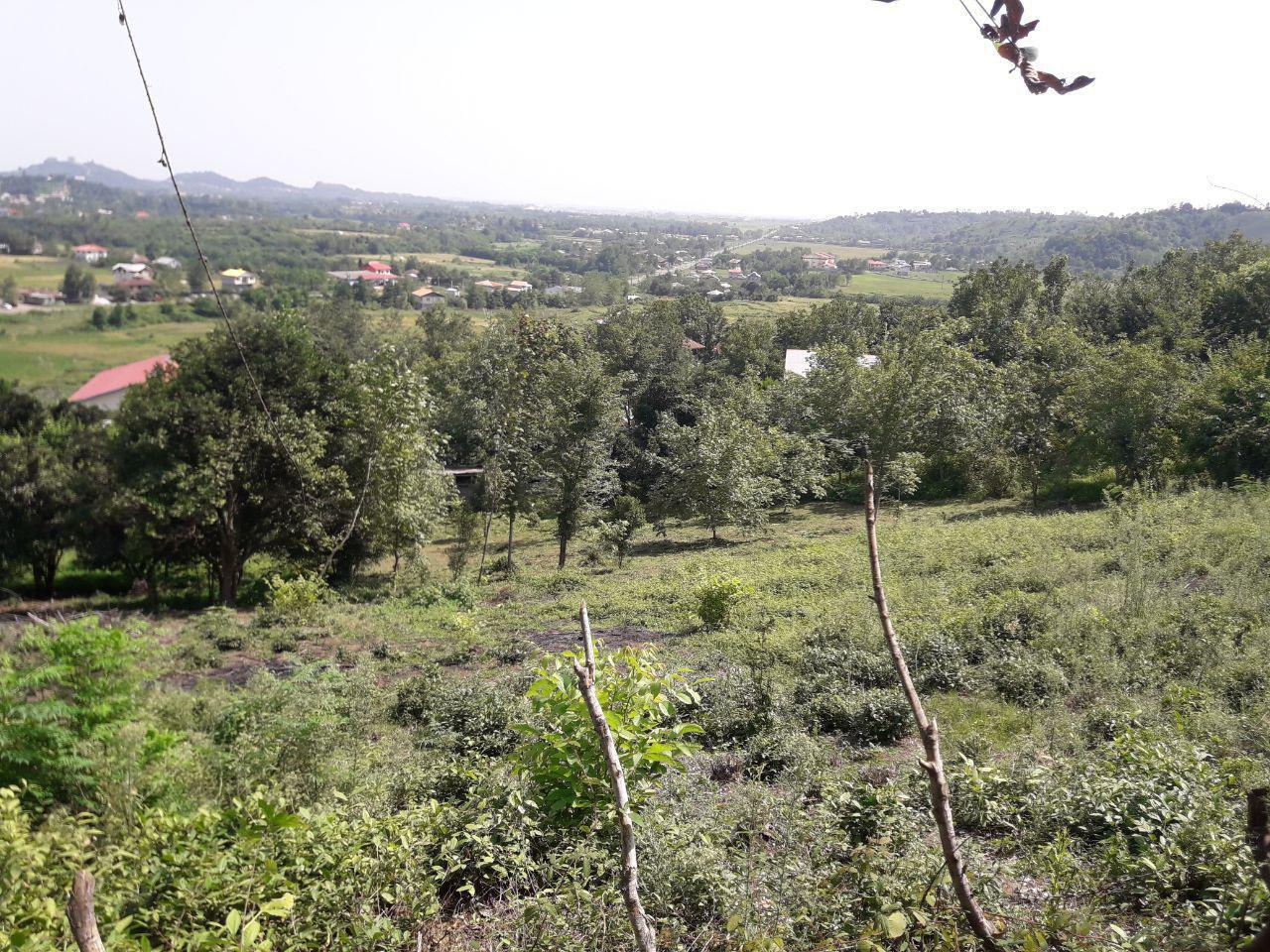 فروش زمین 1500 متری مسکونی اطاقور