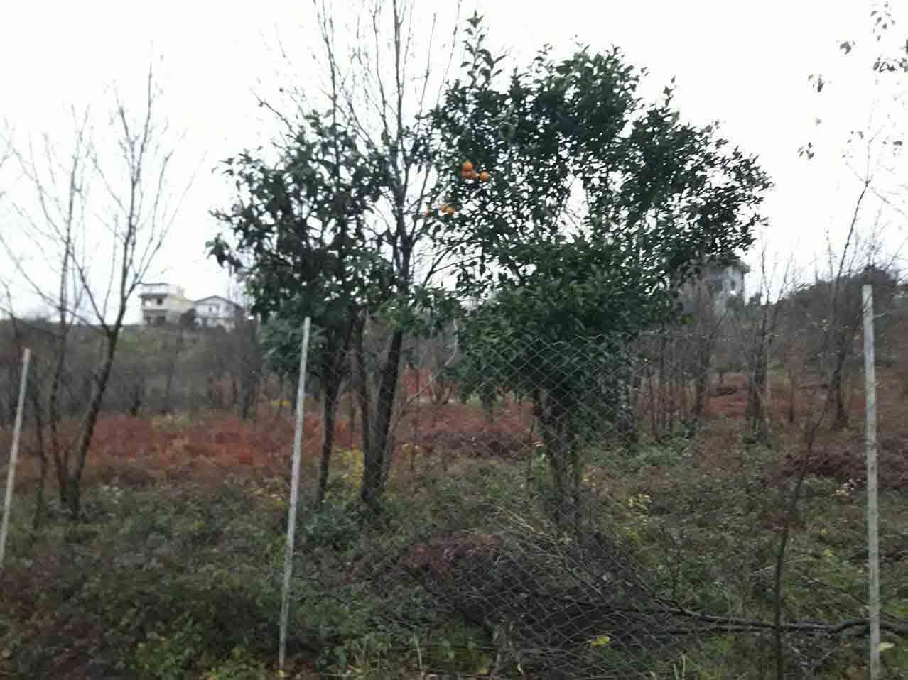 فروش زمین قطعه بندی در طرح هادی ارتفاعات اکبرسرا