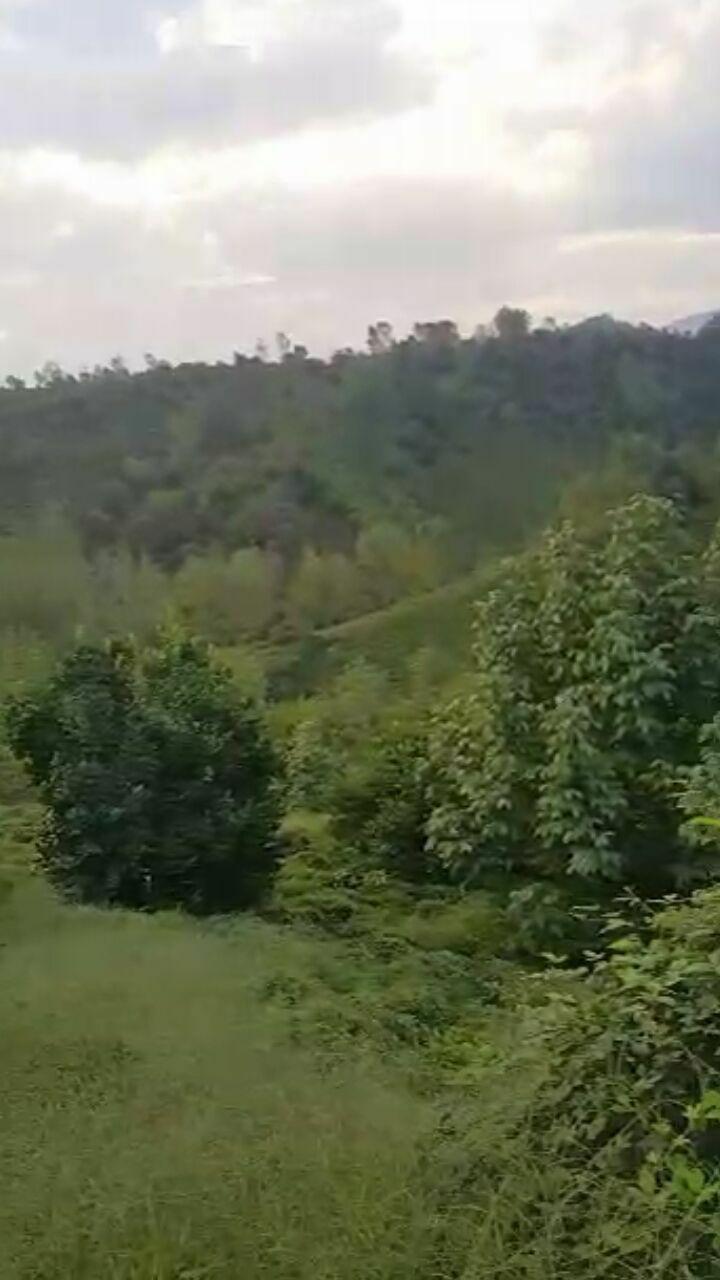 فروش زمین باغ 5747 متری ارتفاعات اطاقور