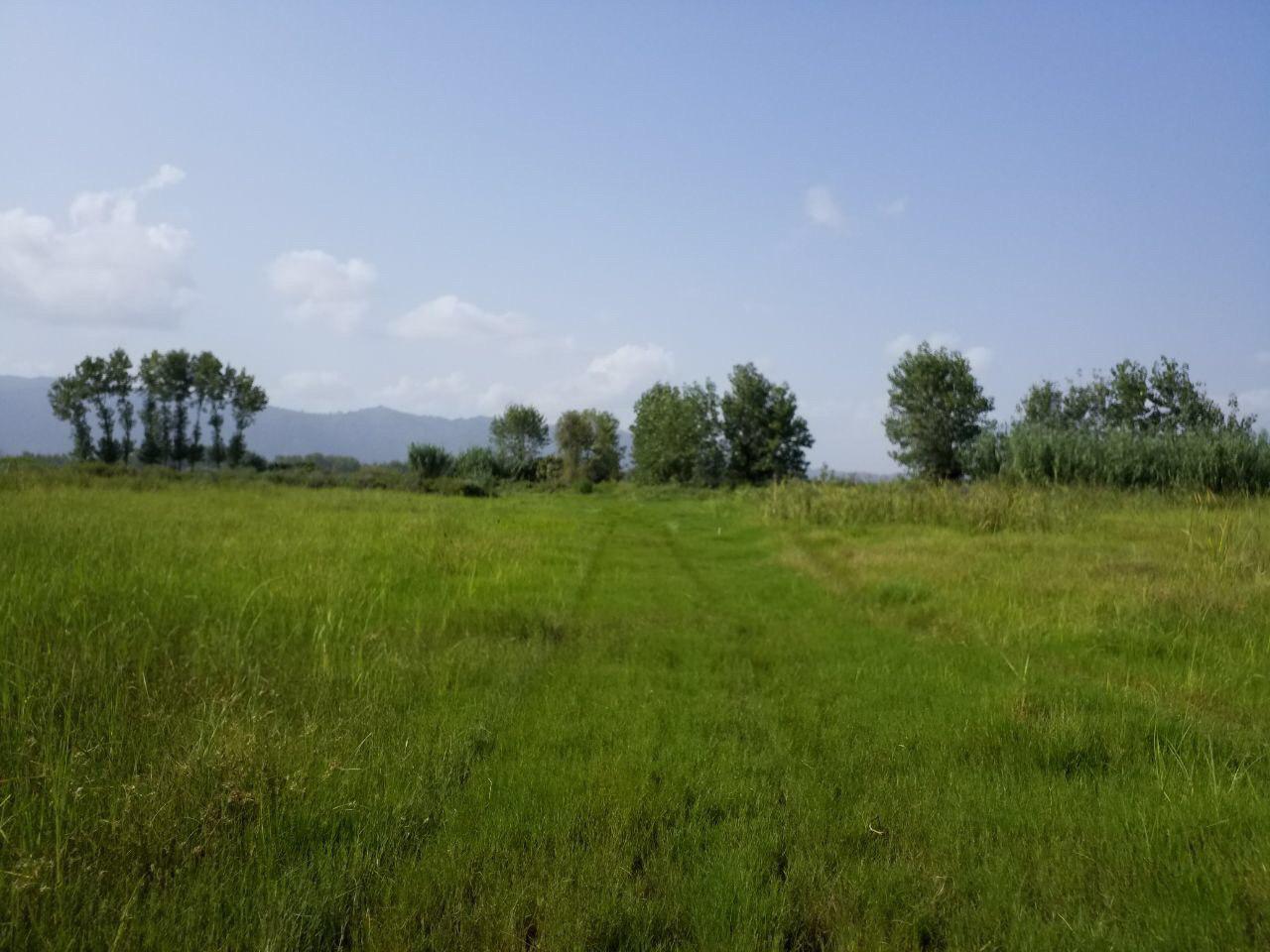فروش 23 هزار متر زمین شالیزار بایر در گیلان