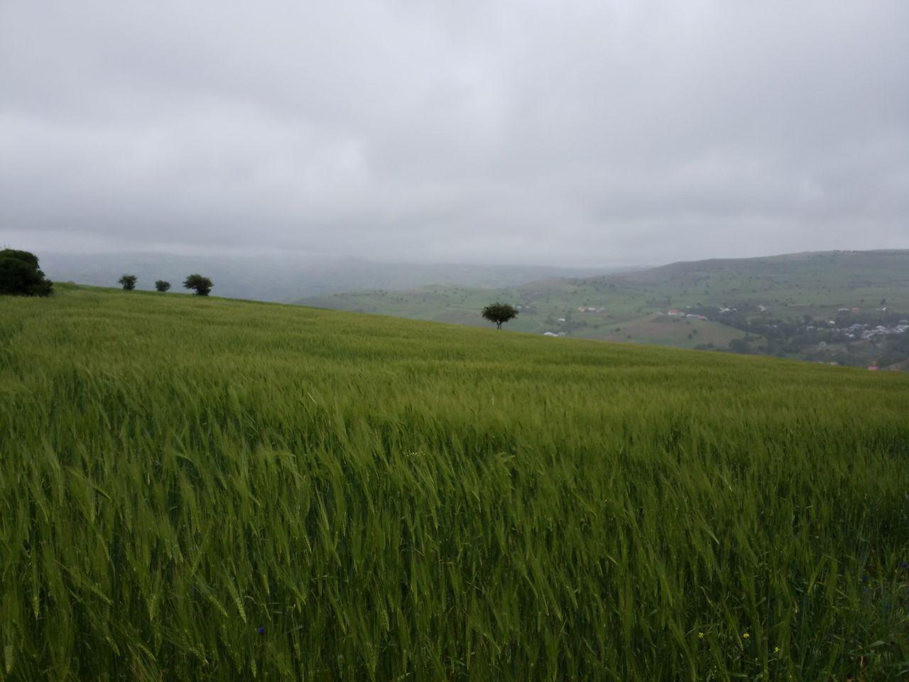 فروش یک قطعه زمین 47000 مترمربع کشاورزی  دیلمان