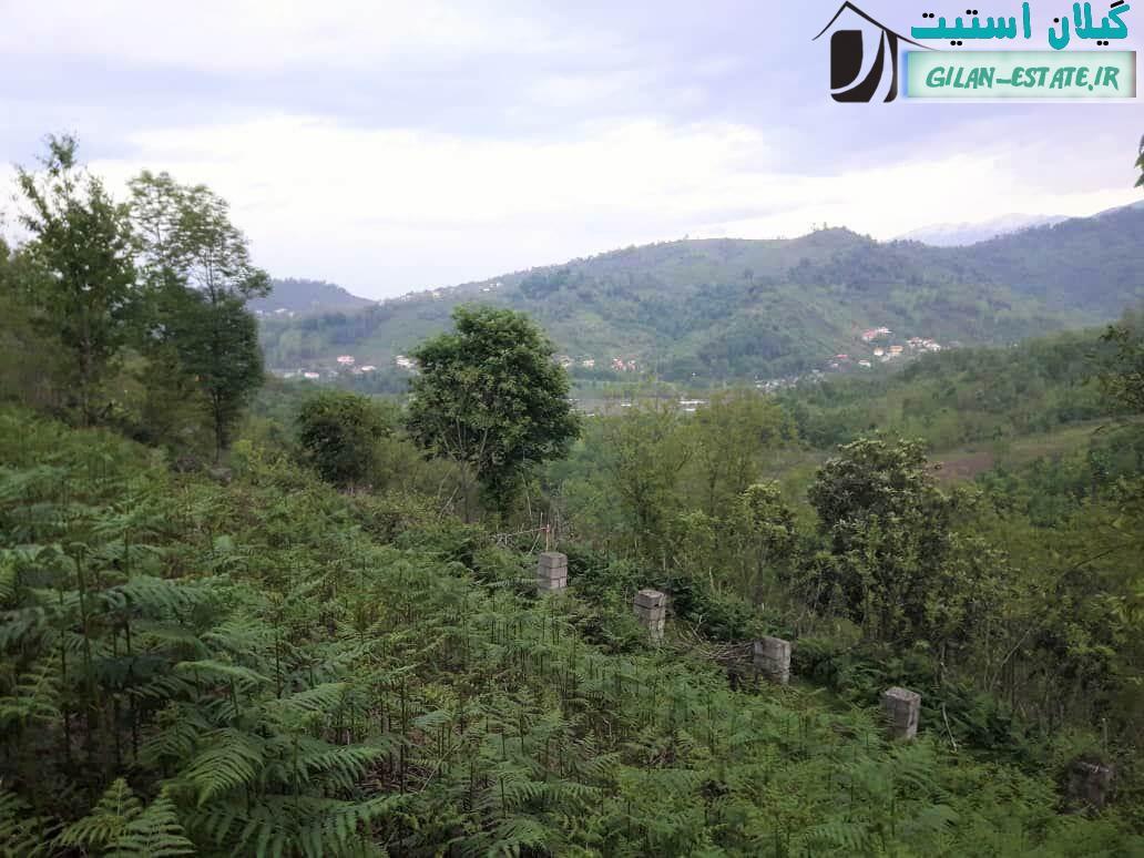 خرید زمین مسکونی جنگلی - 2 هزار متر لنگرود