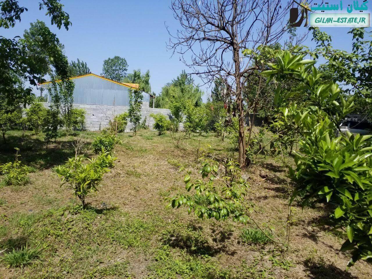 خرید ویلا باغ در لنگرود - 1700 متر زمین باغ میوه
