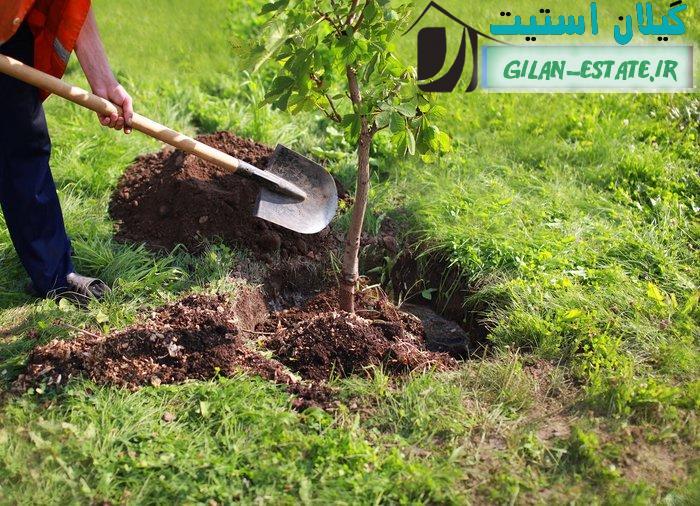 خرید فوری زمین باغی برای درختکاری و باغداری