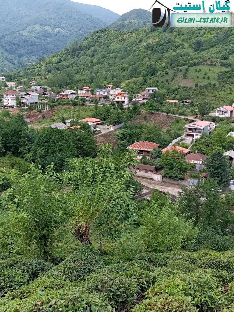 فروش باغ چای مرکبات میوه سنددار ارتفاعات رانکوه