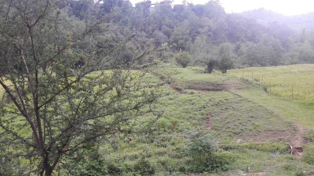 فروش 2 زمین 5000 متر جنگلی سنددار با پروانه ساخت گیلان
