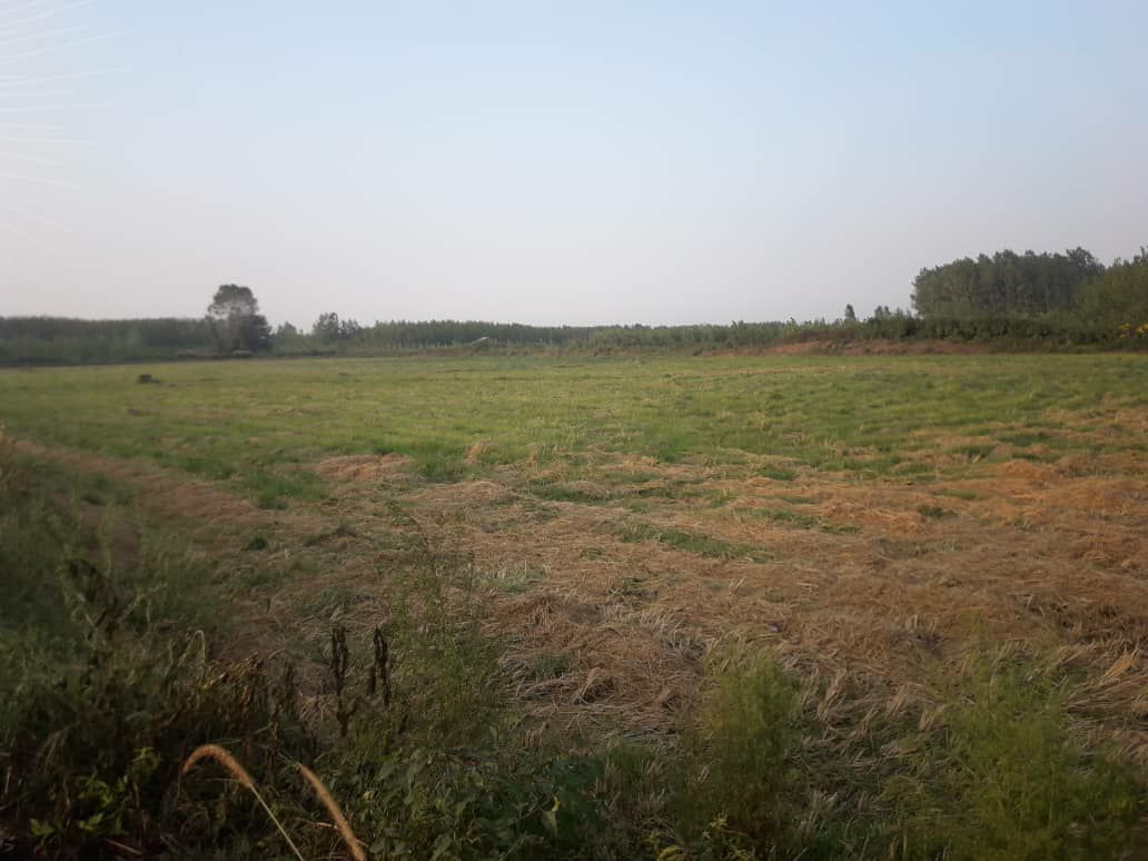زمبن ۱۰ هکتار باغی نصف تبدیل شالی با کلبه لنگرود
